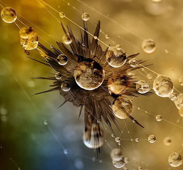 47 imagini cu roua, o splendoare naturala - Poza 5