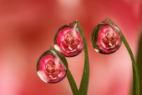 47 imagini cu roua, o splendoare naturala - Poza 6