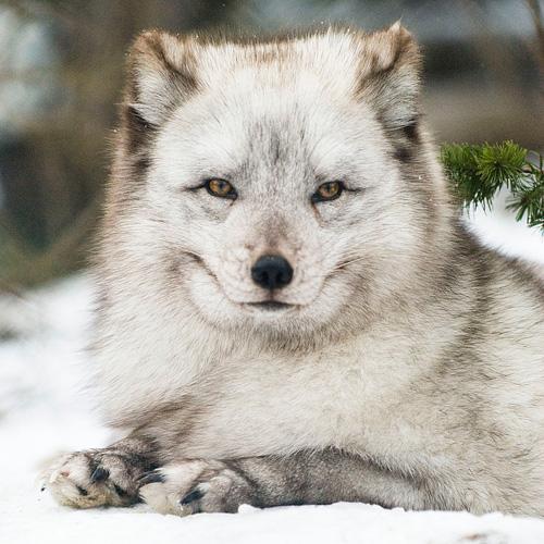 33+1 poze: Animale adorabile prin zapada - Poza 13