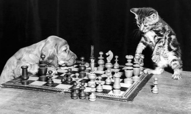 Dupa catei vin pisicile! - Poza 1