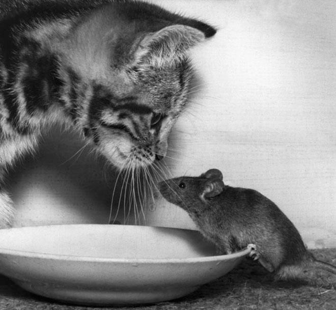 Dupa catei vin pisicile! - Poza 11