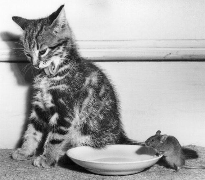 Dupa catei vin pisicile! - Poza 13