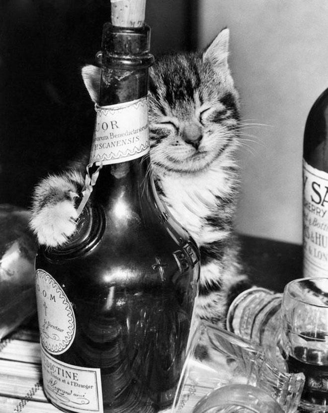 Dupa catei vin pisicile! - Poza 17