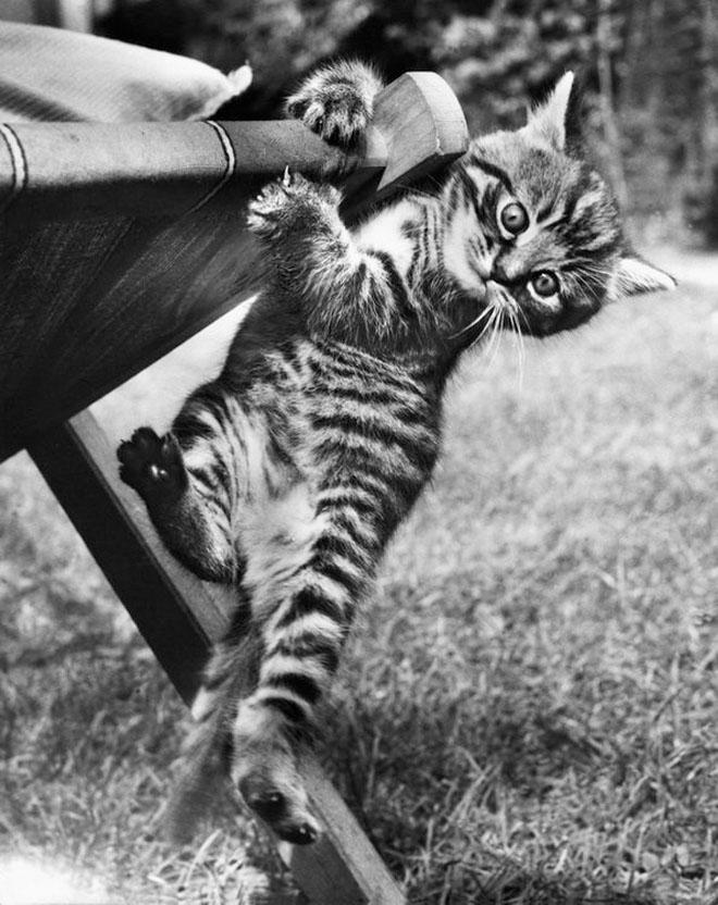 Dupa catei vin pisicile! - Poza 18