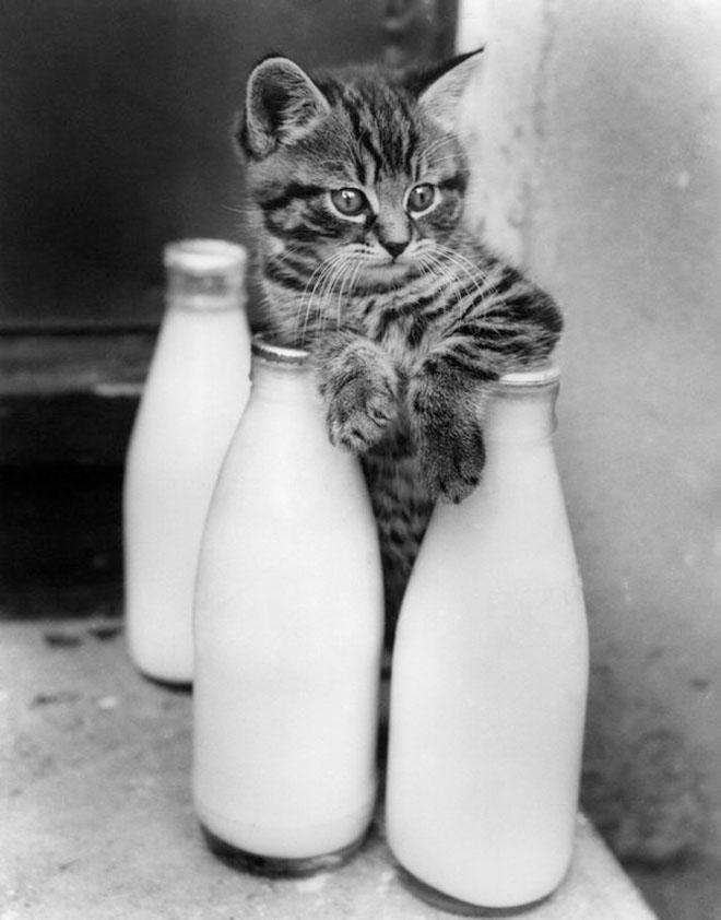 Dupa catei vin pisicile! - Poza 19
