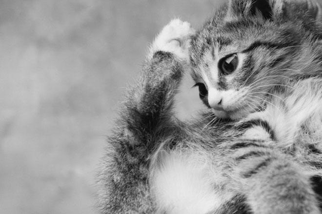 Dupa catei vin pisicile! - Poza 2