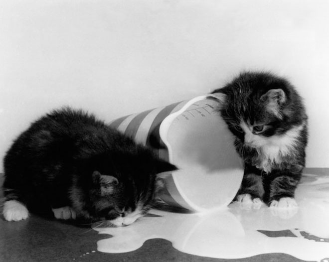 Dupa catei vin pisicile! - Poza 3