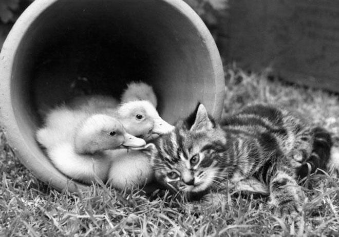 Dupa catei vin pisicile! - Poza 5