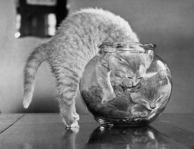 Dupa catei vin pisicile! - Poza 6