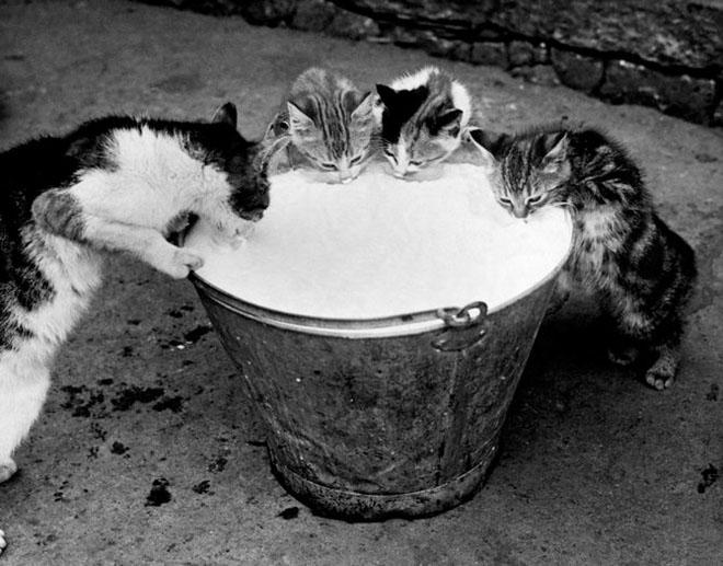 Dupa catei vin pisicile! - Poza 7