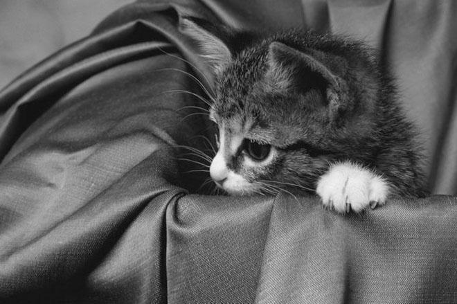 Dupa catei vin pisicile! - Poza 8