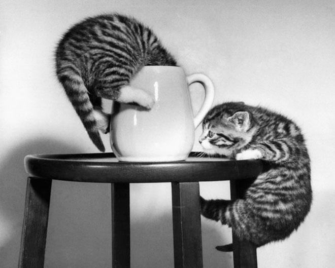 Dupa catei vin pisicile! - Poza 9