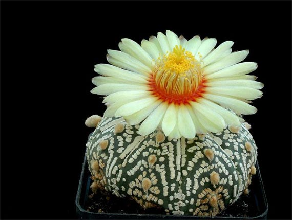 Flori de...cactus! - Poza 1