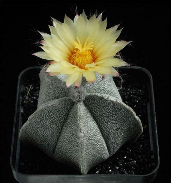 Flori de...cactus! - Poza 10