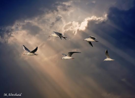 Norii in 32 de poze impresionante - Poza 7