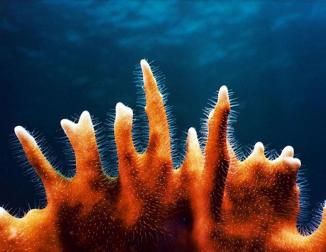 Imperiul coralilor (33 de poze) - Poza 16