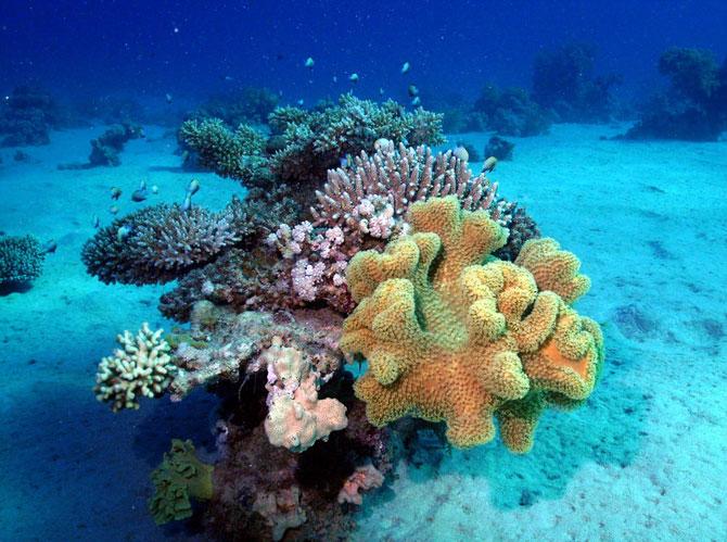 Imperiul coralilor (33 de poze) - Poza 17