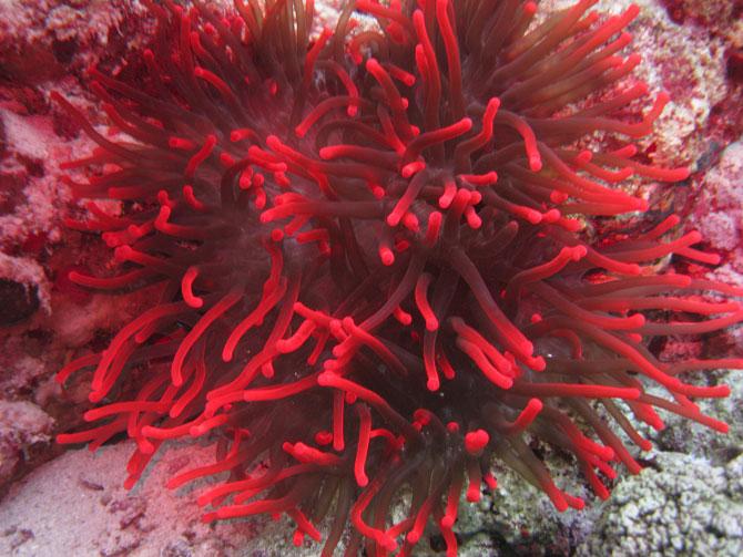 Imperiul coralilor (33 de poze) - Poza 18