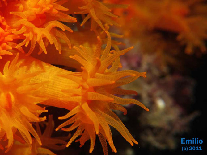 Imperiul coralilor (33 de poze) - Poza 21