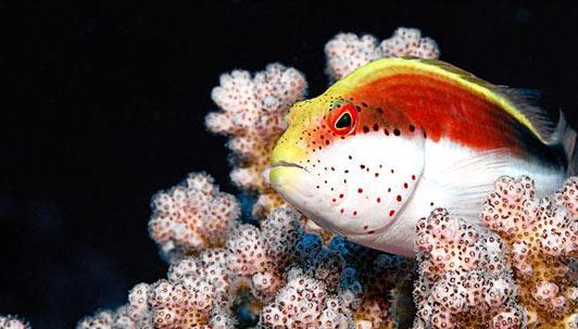 Imperiul coralilor (33 de poze) - Poza 33