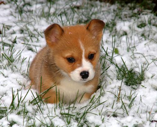 33+1 poze: Animale adorabile prin zapada - Poza 2