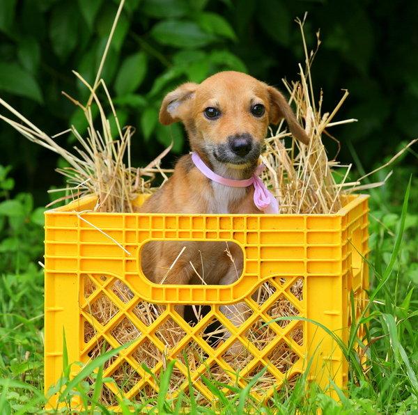 Atentie: Animale simpatice in 45 de poze! - Poza 13