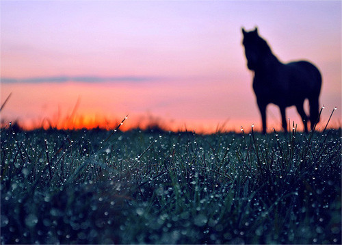 47 imagini cu roua, o splendoare naturala - Poza 8