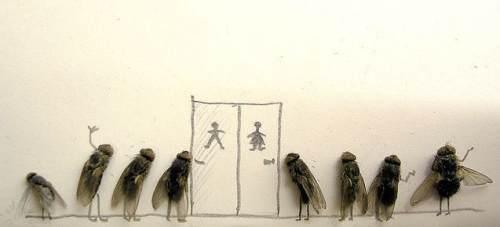 Funny: Muste moarte si putina creativitate