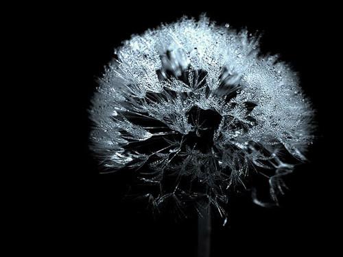 47 imagini cu roua, o splendoare naturala - Poza 10