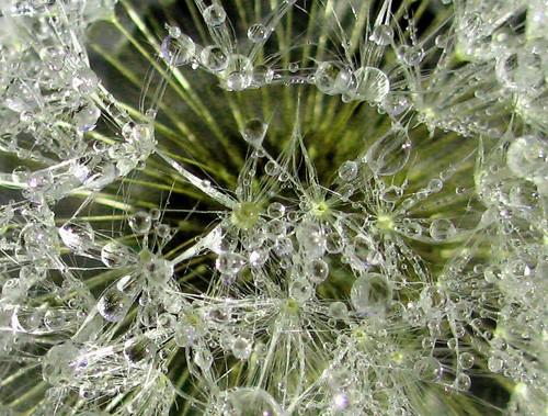 47 imagini cu roua, o splendoare naturala - Poza 19