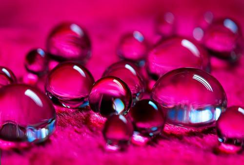 47 imagini cu roua, o splendoare naturala - Poza 20