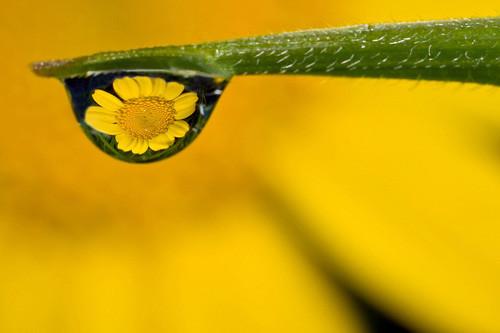 47 imagini cu roua, o splendoare naturala - Poza 11