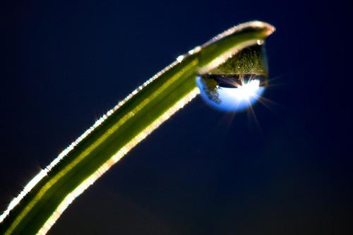 47 imagini cu roua, o splendoare naturala - Poza 12