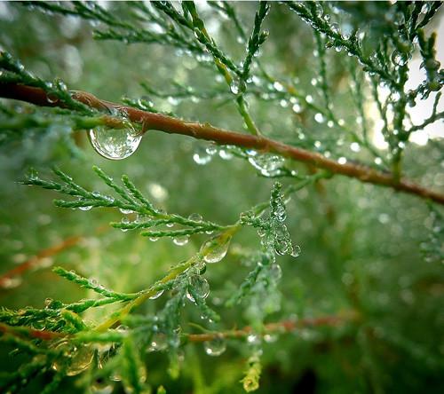 47 imagini cu roua, o splendoare naturala - Poza 13