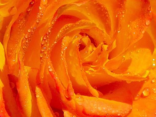 47 imagini cu roua, o splendoare naturala - Poza 17