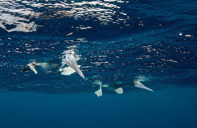 Baldabac, iar in apa. 24 de fotografii superbe de Dmitry Miroshnikov - Poza 11