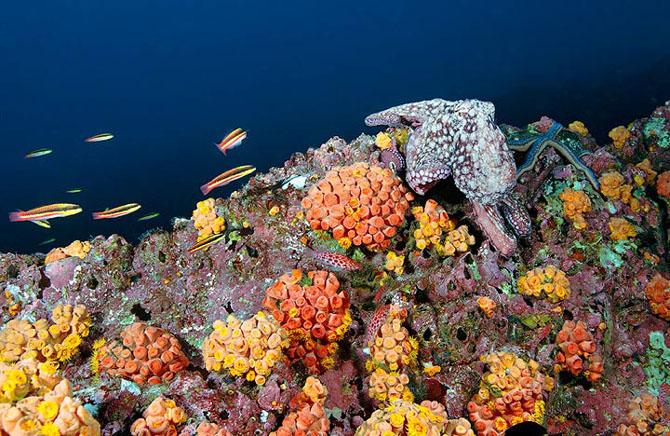 Baldabac, iar in apa. 24 de fotografii superbe de Dmitry Miroshnikov - Poza 16