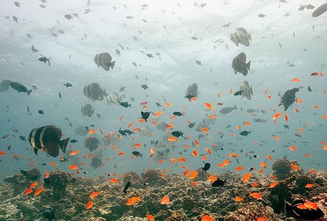 Baldabac, iar in apa. 24 de fotografii superbe de Dmitry Miroshnikov - Poza 5