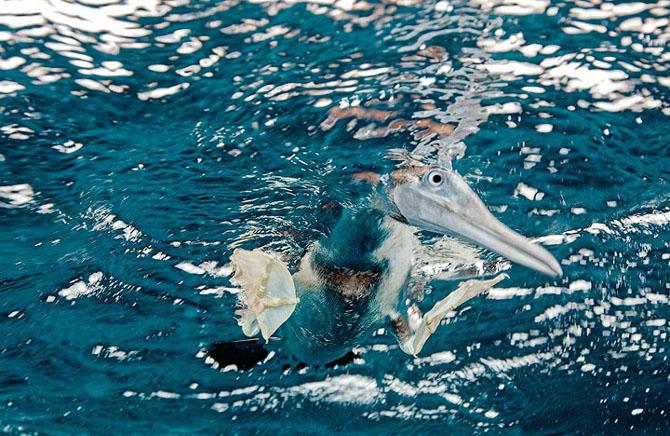 Baldabac, iar in apa. 24 de fotografii superbe de Dmitry Miroshnikov - Poza 6
