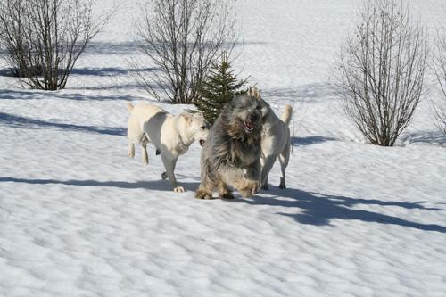 33+1 poze: Animale adorabile prin zapada - Poza 19