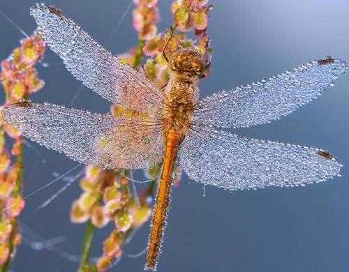 47 imagini cu roua, o splendoare naturala