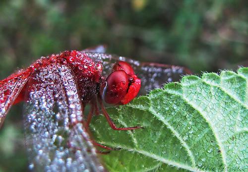 47 imagini cu roua, o splendoare naturala - Poza 24