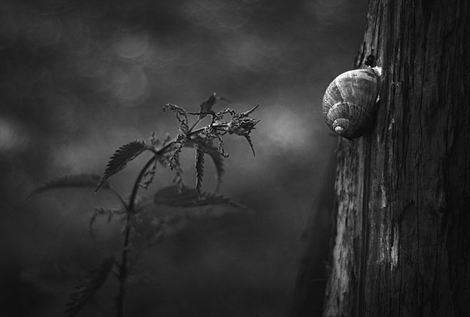 25 de fotografii minunate by Holger Droste - Poza 2
