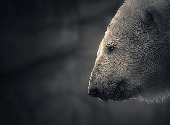 25 de fotografii minunate by Holger Droste - Poza 5