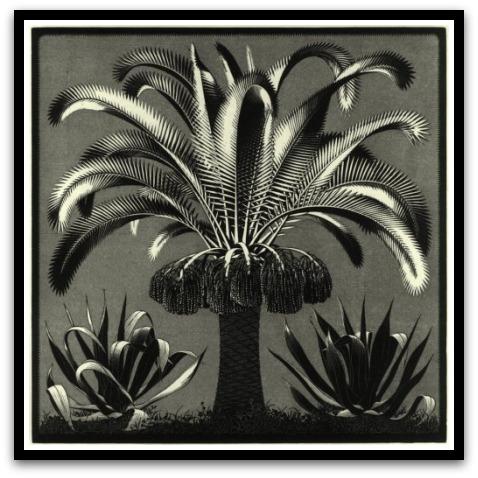 30 desene ciudate - M.C. Escher - Poza 27