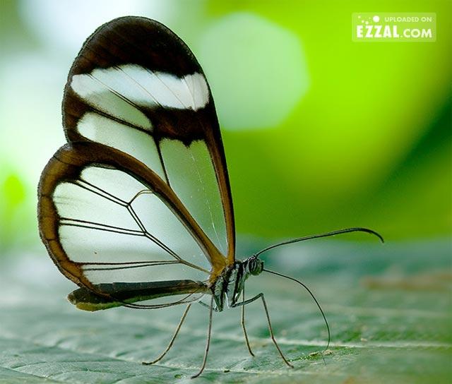 20 de poze cu...fluturi! - Poza 10