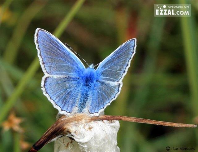 20 de poze cu...fluturi! - Poza 12