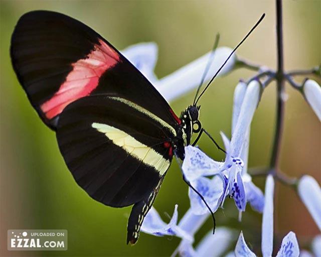 20 de poze cu...fluturi! - Poza 14