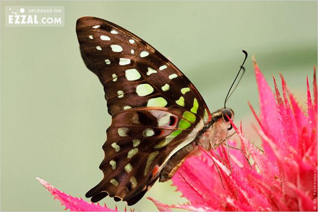 20 de poze cu...fluturi! - Poza 5