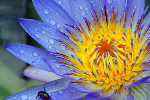 50 de poze splendide cu flori - Poza 3